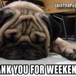 Weekend Pug - Join the Pugs