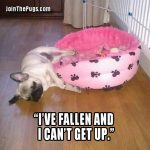 I can't get up - Join the Pugs