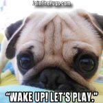 Wake up let's play - Join the Pugs