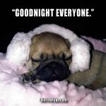 Goodnight everyone - Join the Pugs