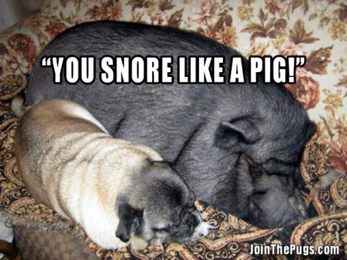 Snore like a Pug - Join the Pugs