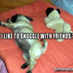 Snuggle with friends - Join the Pugs