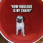 how fabulous is my chair - Join the Pugs
