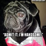One Handsome Pug - Join the Pugs