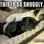 Snuggle Pugs - Join the Pugs