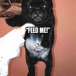 Pug's First Words - Join the Pugs