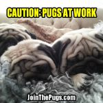 Wendy Davenschot with Seloy, Ragnar, Loki - Join the Pugs