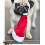 Christmas Pug - Join the Pugs
