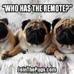 Who has the remote - Join the Pugs