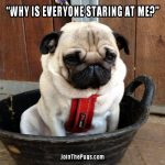 why is everyone staring at me - Join the Pugs
