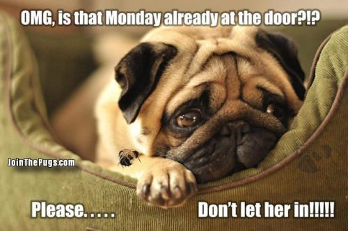 Don't Let Monday In! - Join the Pugs