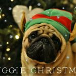 Christmas Pug-Elf - Join the Pugs