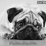 Wendy Davenschot and Loki - Join the Pugs