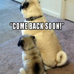 Come back soon - Join the Pugs