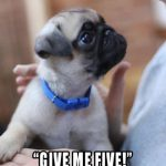 Give me five! - Join the Pugs