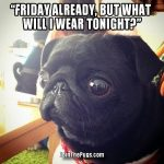 What will i wear tonight - Join the Pugs