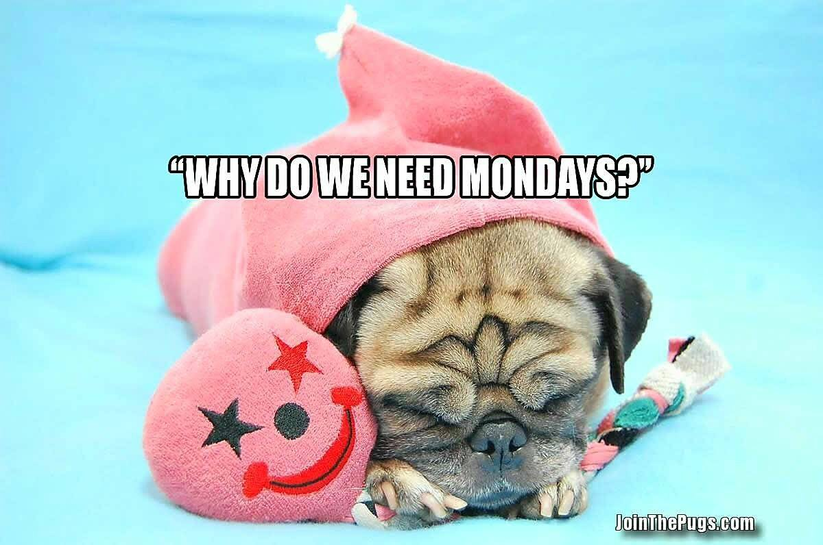 Pug asks why do we need Monday's