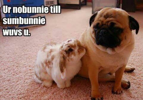 Bunnies and Pugs, yes please!