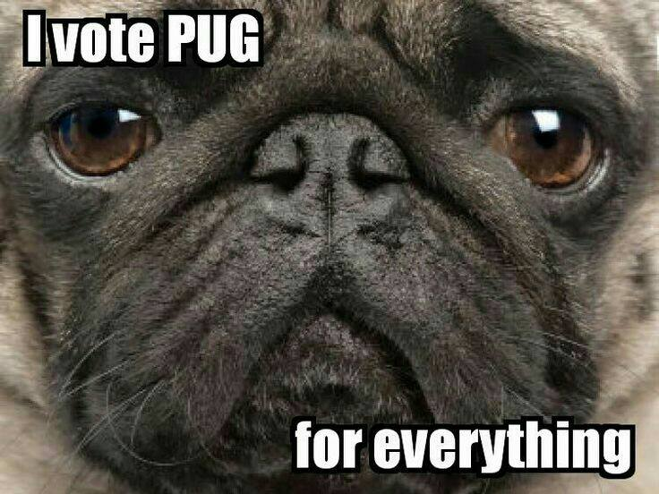 If you're tired of the election process, then Vote Pug!