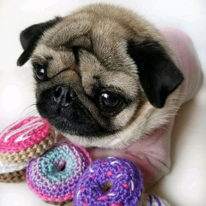 Bark it out for Candy Pugs
