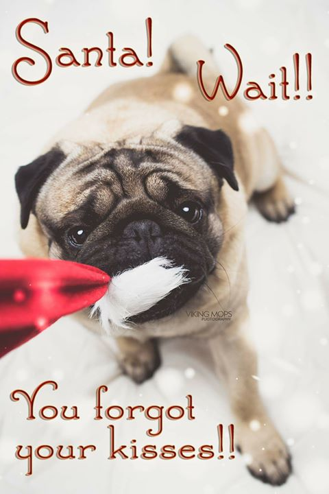 Santa wait for your kisses from the Pug!