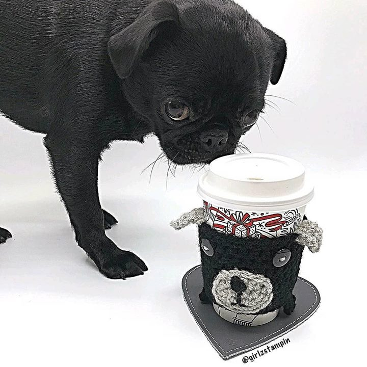 How pawsome is this Pug knit coffee warmer