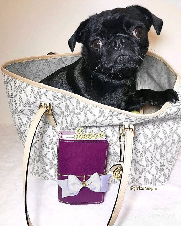 Black Pug in Michael Kors Tote
