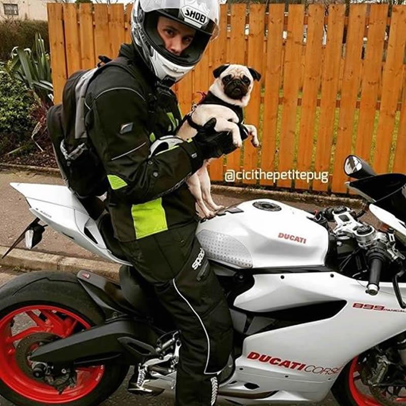 Cici the Ducati Pug