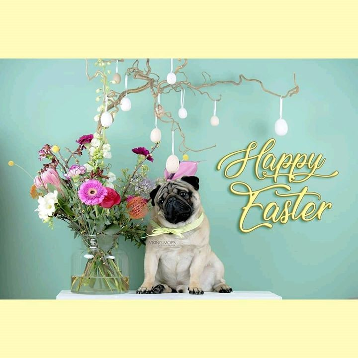 Happy Easter from Join the Pugs and Viking Mops