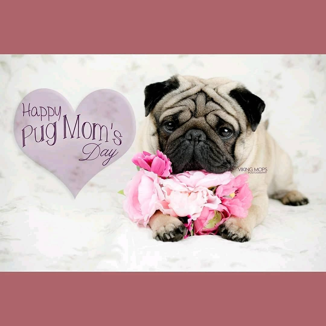Happy Mother's Day Pug by VikingMops