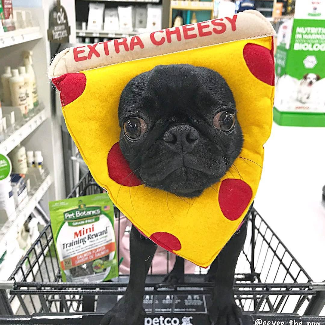 dominos new mascot eevee the pug