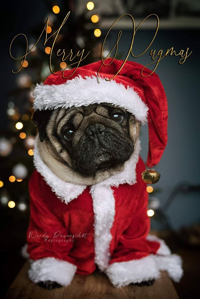 Merry Christmas from Join the Pugs 1